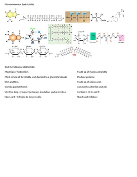 Macromolecule Sort Activity