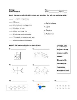 Macromolecule Worksheet