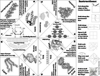 Macromolecules Activity: Carbon Compounds: Carbohydrates, Lipids, Proteins etc