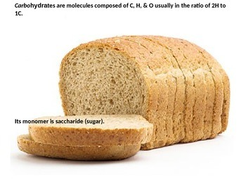 Biology - Macromolecules/Biomolecules