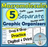 Macromolecules Concept Maps & Graphic Organizer- Card Sort- Drag & Drop w/Google