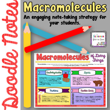 Macromolecules Doodle Notes for Engaging your Students