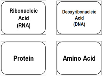 Macromolecules Flash Cards