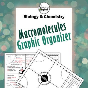 Macromolecules Graphic Organizer - Lipid, Protein, N.Acid, Carbs