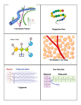 Macromolecules- Introduction (Card Sort)