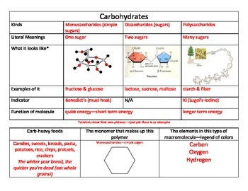 Macromolecules Notes Organizers