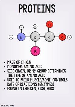 Macromolecules Poster Pack