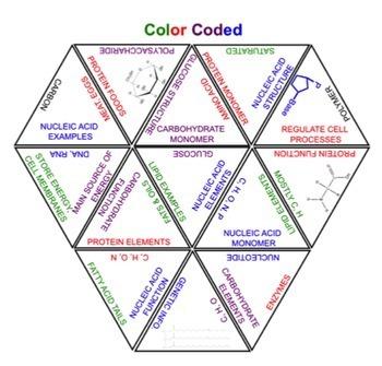 Macromolecules Puzzle