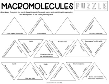 Macromolecules Puzzle for Review or Assessment (Editable Version Included)