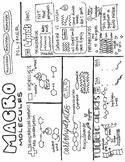 Macromolecules Sketch Notes