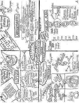 Macromolecules Sketch Notes W/Notes, Student FIB Sketch Notes & BONUS Foldable!