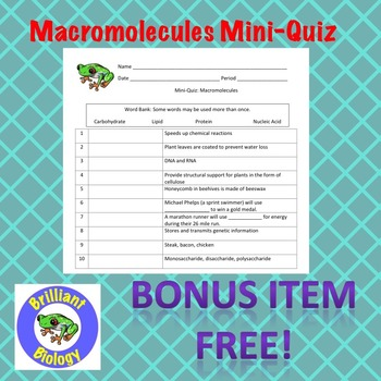Macromolecules Task Cards: Carbohydrates, Lipids, Nucleic Acids, & Proteins