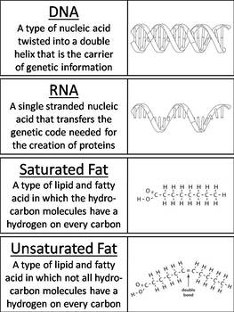 Macromolecules Word Wall Cards: Carbohydrates, Lipids, Proteins, Nucleic Acids