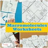 Macromolecules Worksheet Bundle