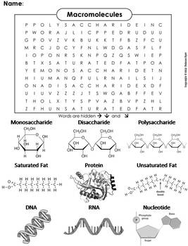 Macromolecules Worksheet/ Word Search