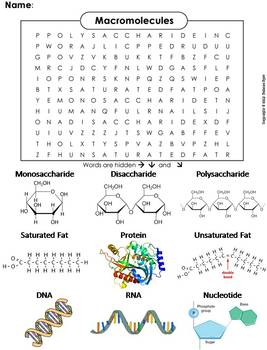 macromolecules worksheet word search by science spot tpt. Black Bedroom Furniture Sets. Home Design Ideas