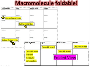 Macromolecules foldable graphic organizer for interactive notebook