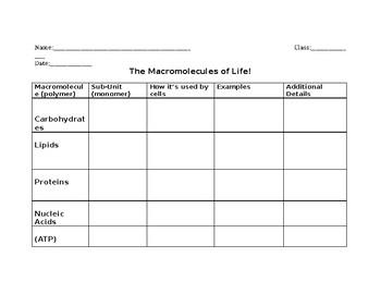 Macromolecules of Life Graphic Organizer