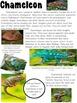 High Interest Articles -Madagascar Informational Texts