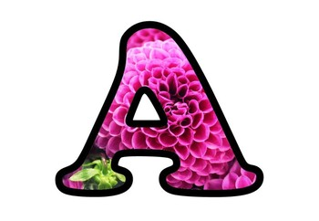 Magenta Dahlias Bulletin Board Letters, Numbers, Symbols, Spring Flowers Decor