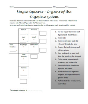 Magic Squares - Anatomy Bundle