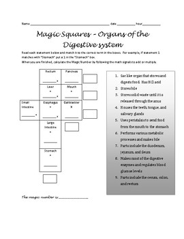 Magic Squares - Organs of the Digestive System