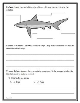 Magic Tree House Fact Tracker: Dolphins and Sharks (Osborne) Book Study (23 pgs)