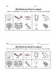 Magnets - 2 Activities & Assessment