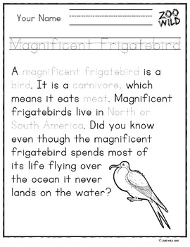 Magnificent Frigatebird -- 10 Resources -- Coloring Pages, Reading & Activities