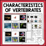Main Characteristics of the Vertebrates | Nature Curriculu