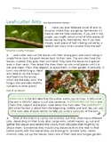 Main Idea Nonfiction Reading Passage Worksheet