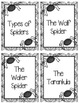 Main Idea and Detail Spiders
