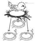 Main Idea and Details- Birds Nests