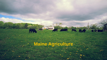 Maine Agriculture Slideshow