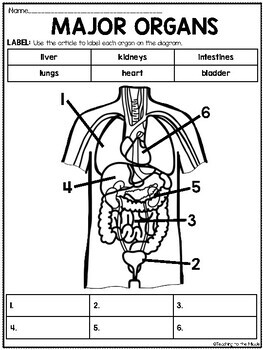 Major Body Organs Overview Reading Comprehension and ...