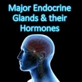 Major Endocrine Organs & Their Hormones