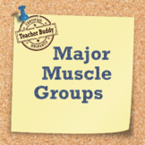 Major Muscle Groups Activity
