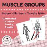 Major Muscle Groups Diagram