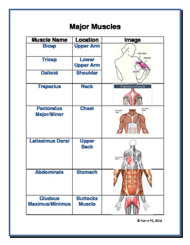 Muscles and Bones Identification & Location Guides, Activities & Assessments
