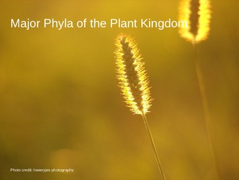 Major Phyla in the Plant Kingdom