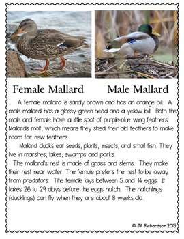 Make Way For Ducklings Book Companion (Paired Text) Fun ESL ELL Resources!
