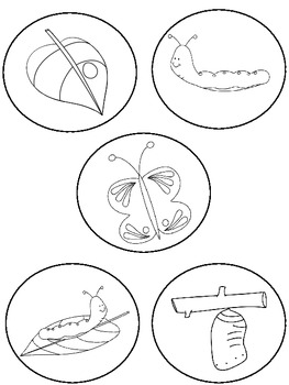 Make Your Own Butterfly Life Cycle