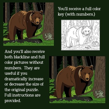 Make Your Own Color By Number Bear (Biomes Series #3)