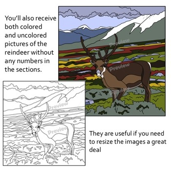 Make Your Own Color By Number Reindeer (Biomes Series #5)