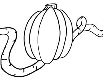 Make Your Own Pumpkin Patch!
