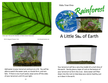 Make Your Own Rainforest  (Included in Rainforest: Maps, Mural, Minimuseum)