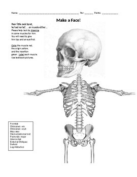 Make a Face! Muscle Origin & Insertion Activity