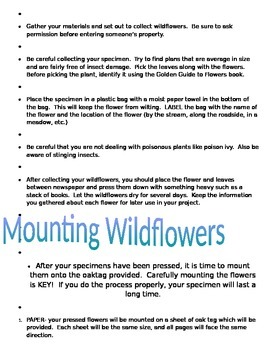 Make a Wildflower Collection