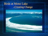 PowerPoint:  Making Environmental Change for the Future--Mono Lake