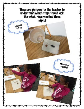 Making Observations, Investigating, and Inquiring Penny Experiment
